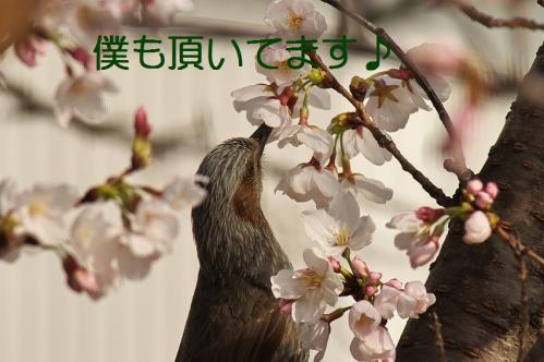 060_20130330214810.jpg