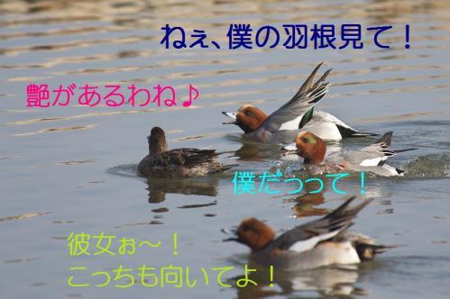 060_20130416214357.jpg