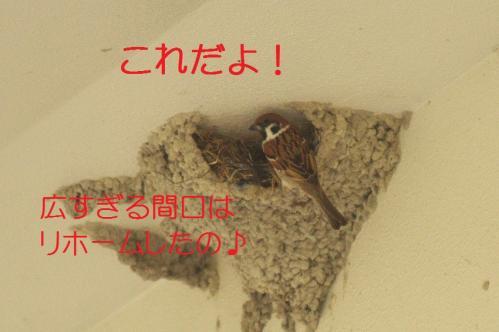 060_20130430194333.jpg