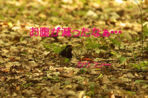 060_20130503222026.jpg