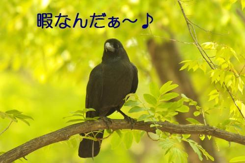 060_20130506201443.jpg