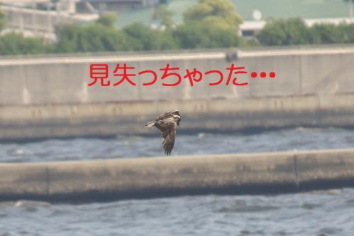 060_20130527215509.jpg