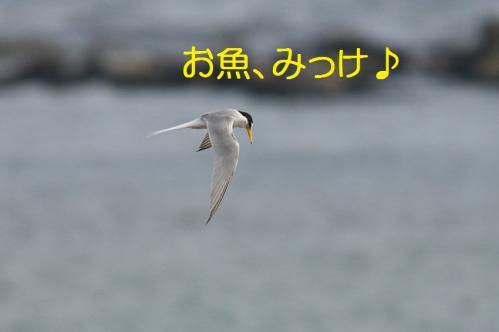 060_20130528185814.jpg