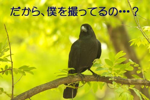 065_20130506201446.jpg