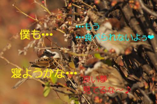 070_20130305204254.jpg
