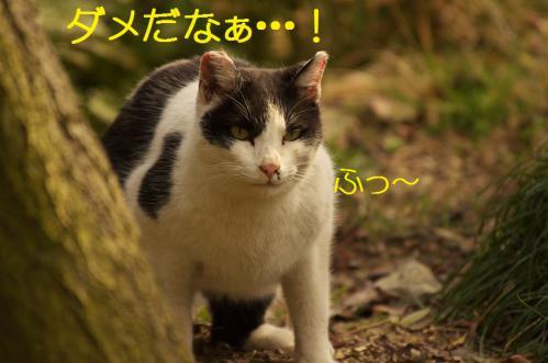070_20130313215108.jpg