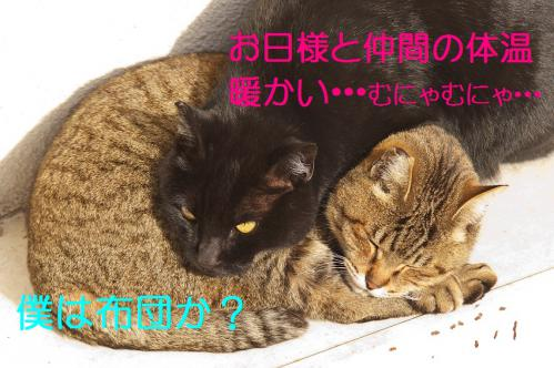 070_20130318215557.jpg
