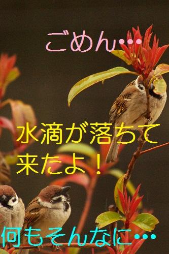 070_20130320211125.jpg