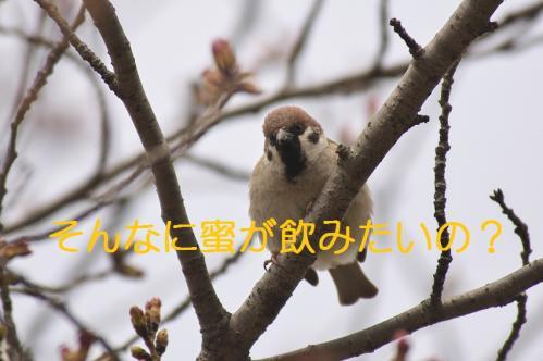 070_20130327210409.jpg
