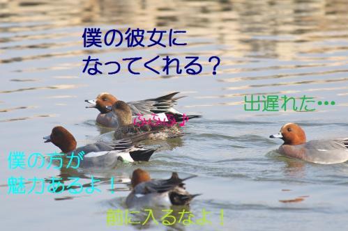070_20130416214401.jpg