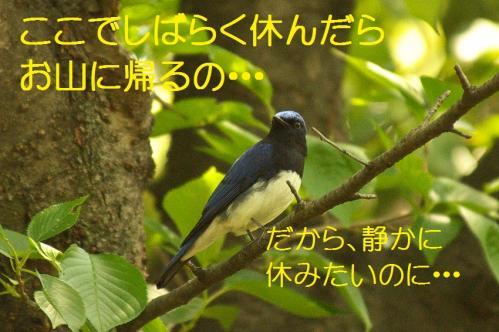 070_20130502205918.jpg