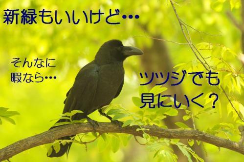 070_20130506201450.jpg