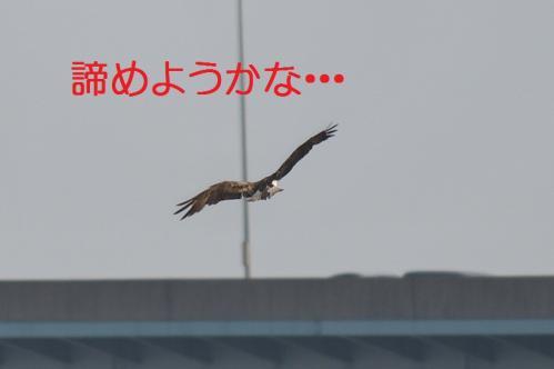 070_20130527215512.jpg