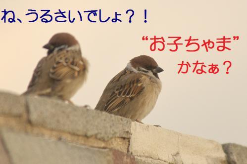 080_20130223221751.jpg