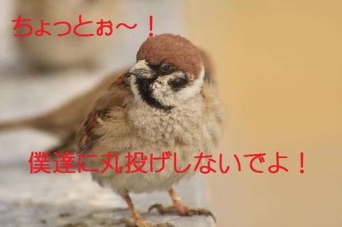 080_20130304213824.jpg