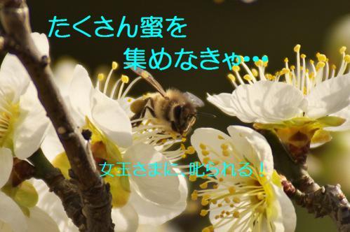 080_20130312194630.jpg