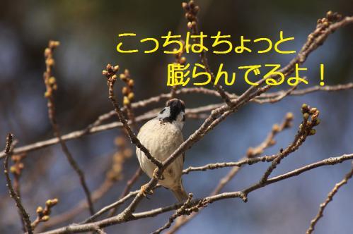 080_20130317212014.jpg