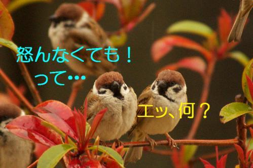 080_20130320211129.jpg