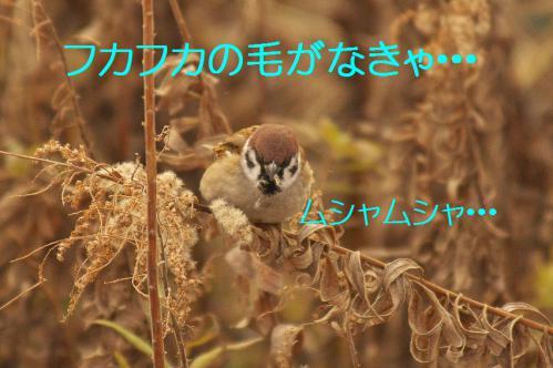 080_20130322213438.jpg