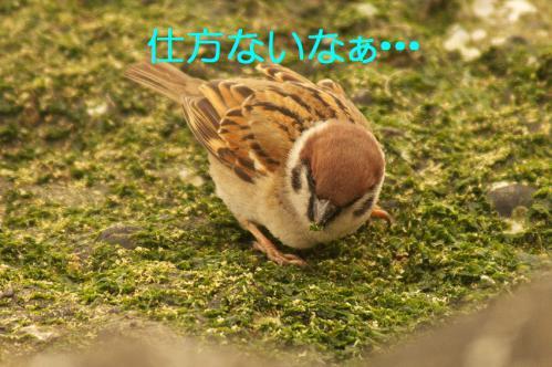 080_20130322231256.jpg