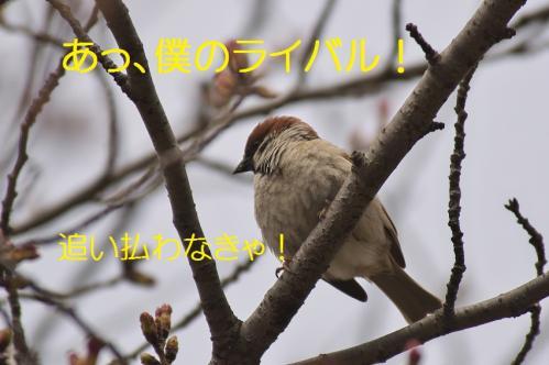 080_20130327210148.jpg