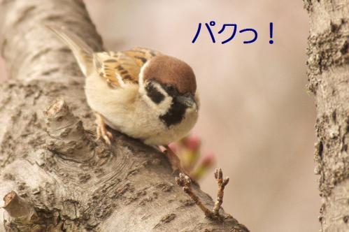 080_20130328200851.jpg