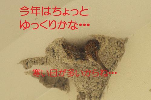 080_20130430194341.jpg