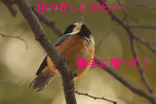 090_20130215211501.jpg