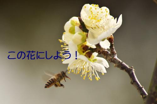 090_20130312194633.jpg