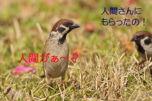 090_20130319203601.jpg