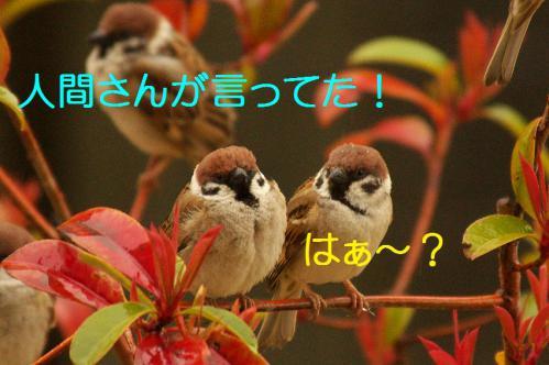 090_20130320211136.jpg