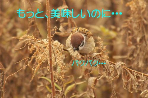 090_20130322213441.jpg