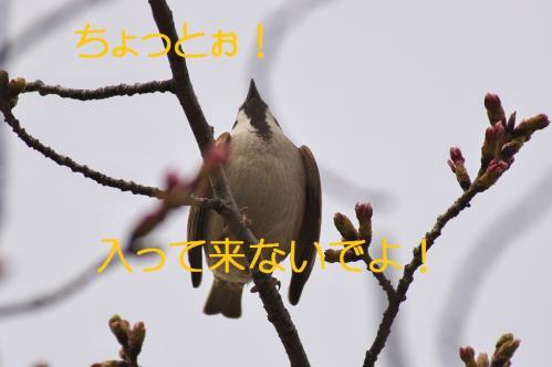 090_20130327210151.jpg