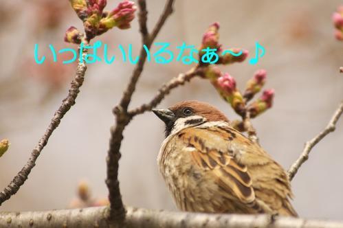 090_20130328200856.jpg