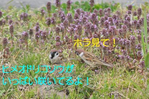 090_20130329214054.jpg