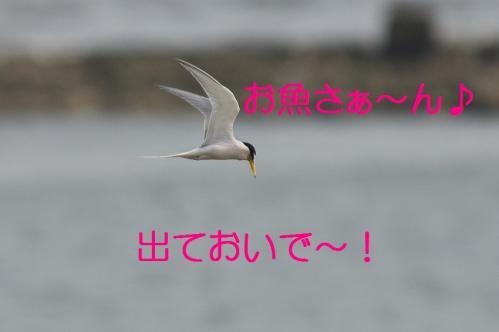 090_20130527215517.jpg