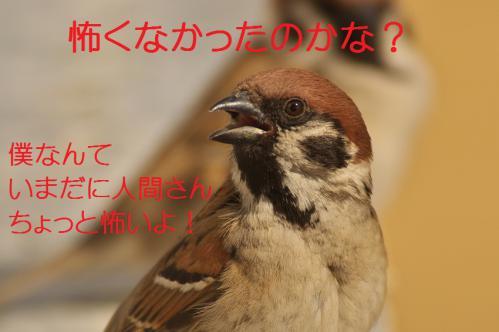 095_20130215211506.jpg