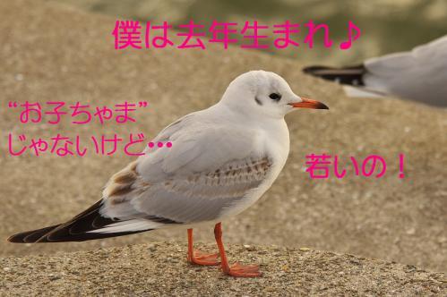 100_20130223221757.jpg