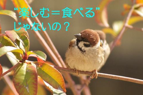 100_20130302042845.jpg