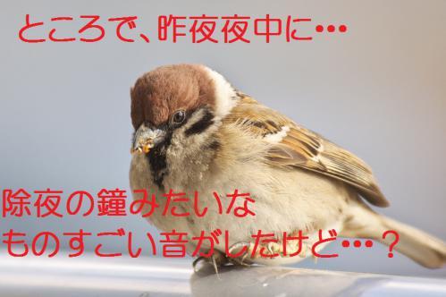 100_20130305204259.jpg