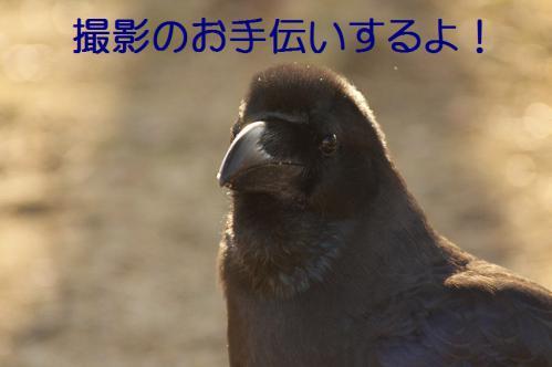 100_20130307204532.jpg