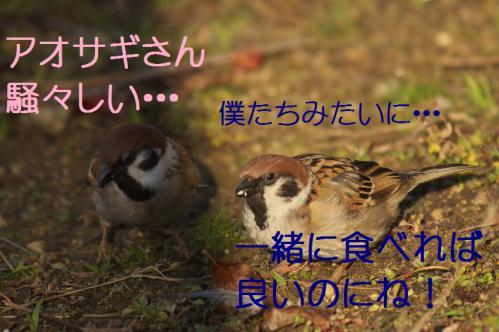 100_20130309224500.jpg
