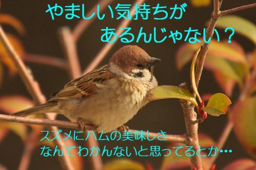 100_20130311210458.jpg