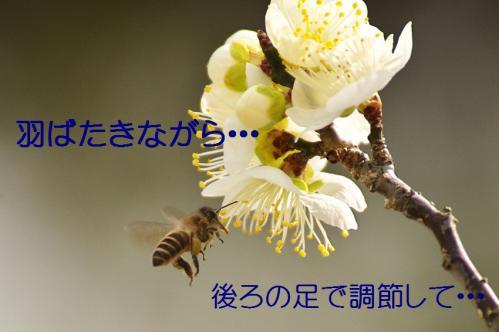 100_20130312194636.jpg