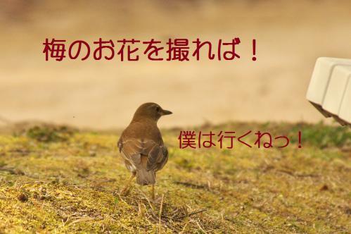 100_20130313215412.jpg