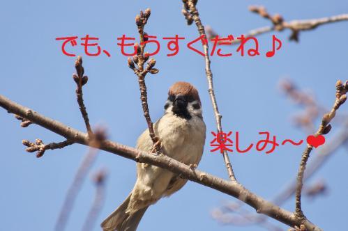 100_20130317212020.jpg