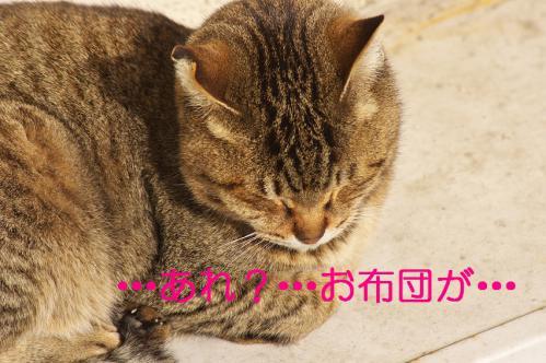 100_20130318215605.jpg
