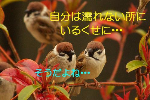 100_20130320211140.jpg