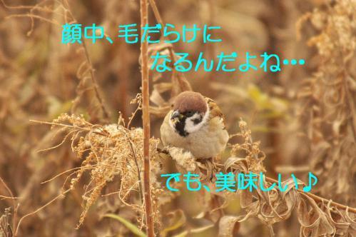 100_20130322213445.jpg