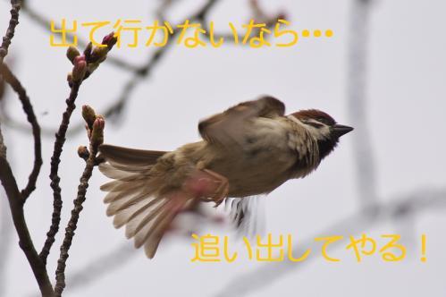 100_20130327210156.jpg